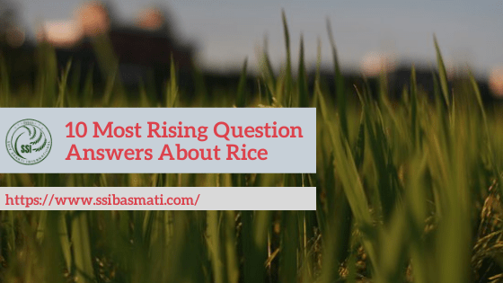10-Most-Rising-Question-ANswers-About-Rice-min.png