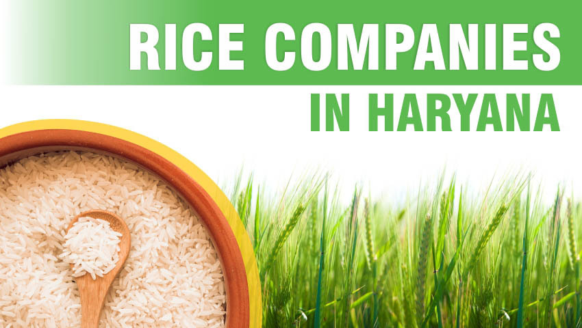 Rice Companies in Haryana