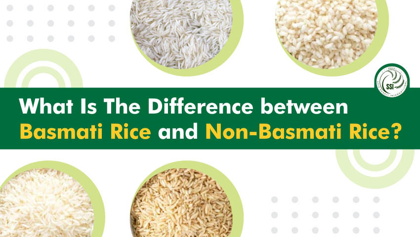 What is the Difference between Basmati Rice and Non-Basmati Rice?